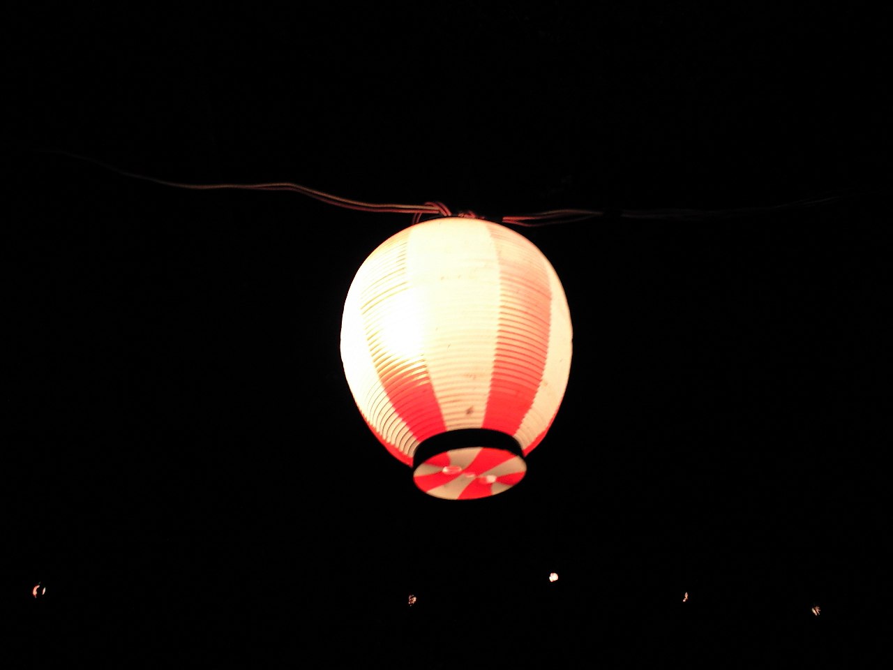 桜より、提灯。