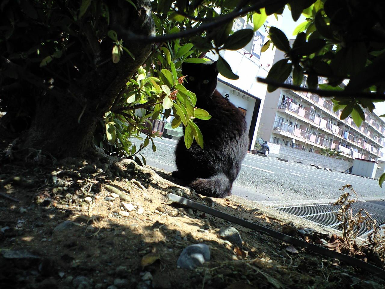 黒猫と、昼休み。