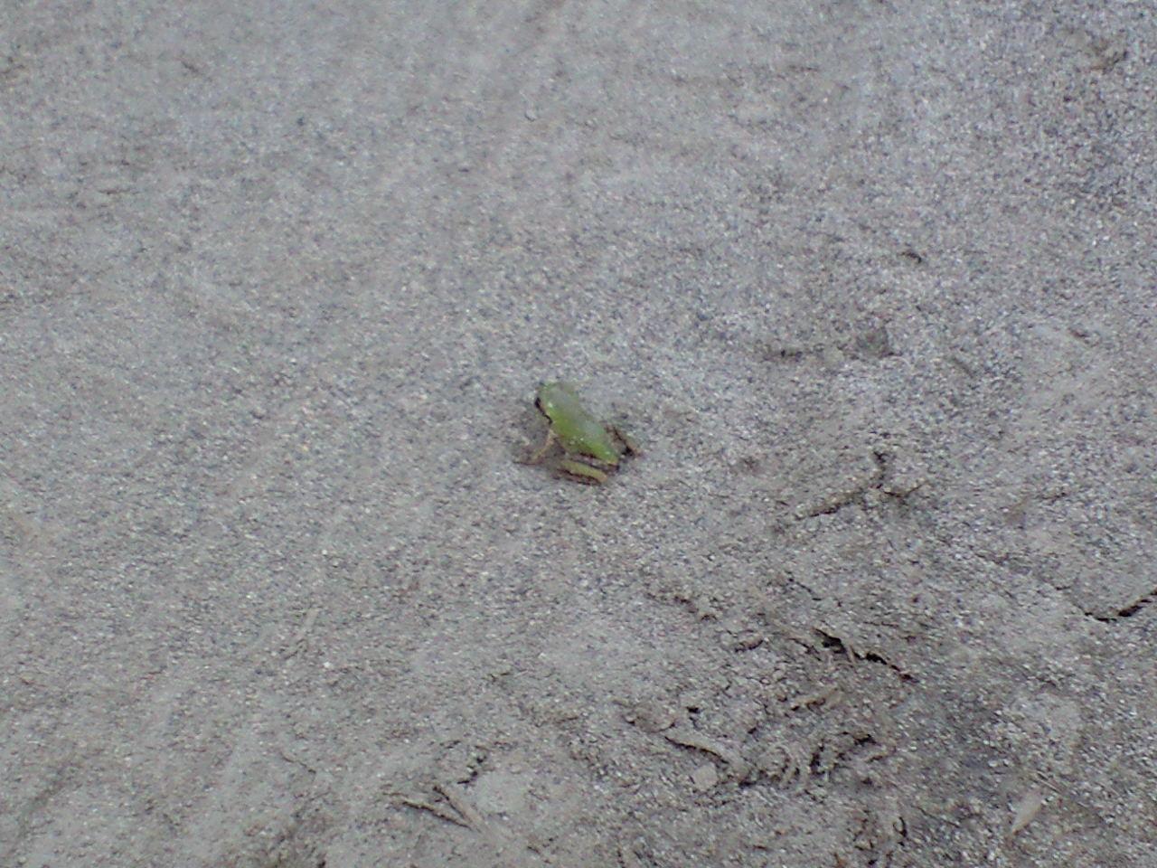 帰ると、カエルが。