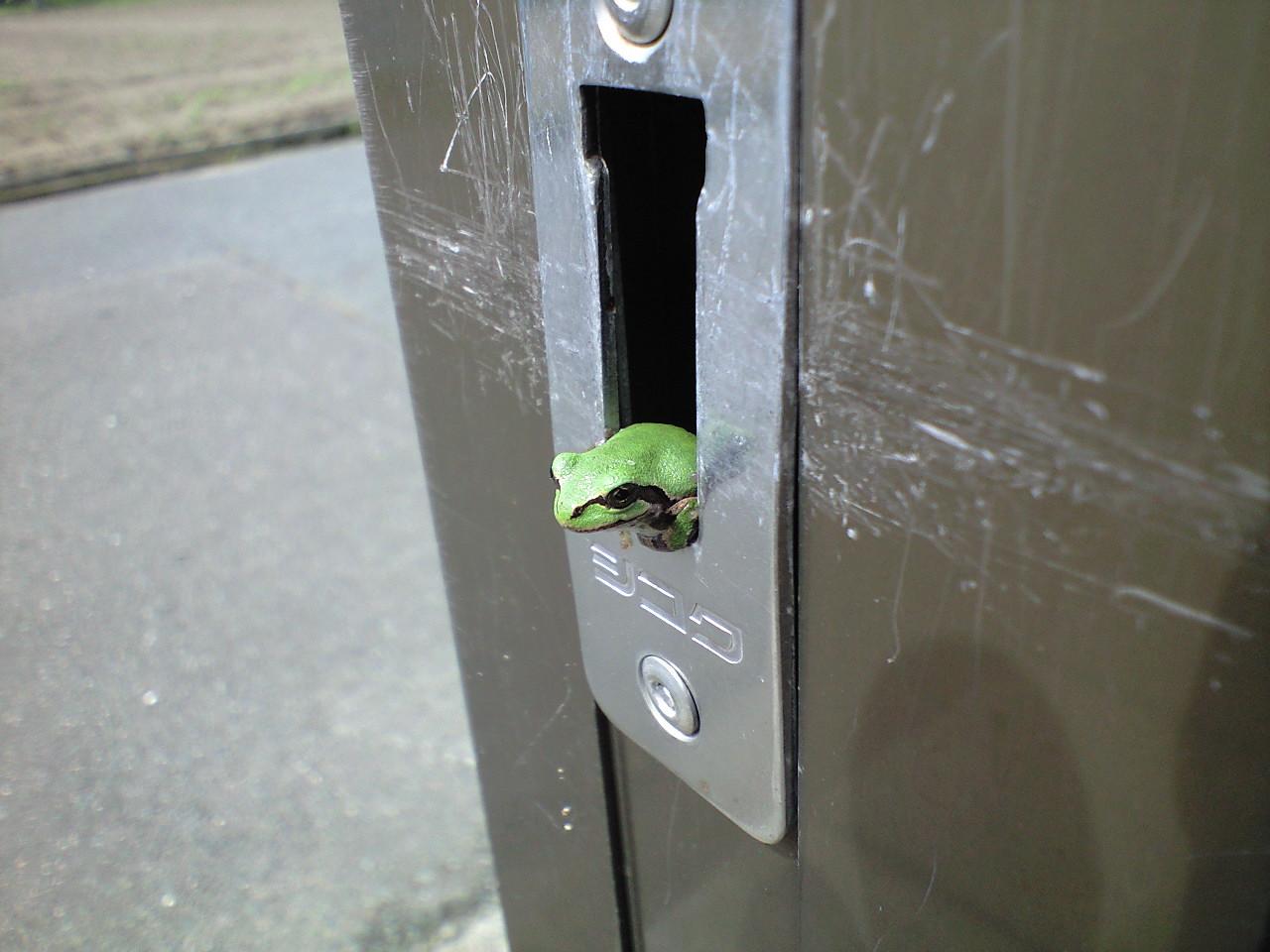 また、カエル。